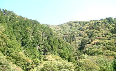 091112sennomori-logobosyuu