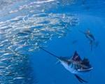 smallest-fish-sardines_32533_170