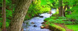 水林森林公園3