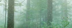 森林02~1